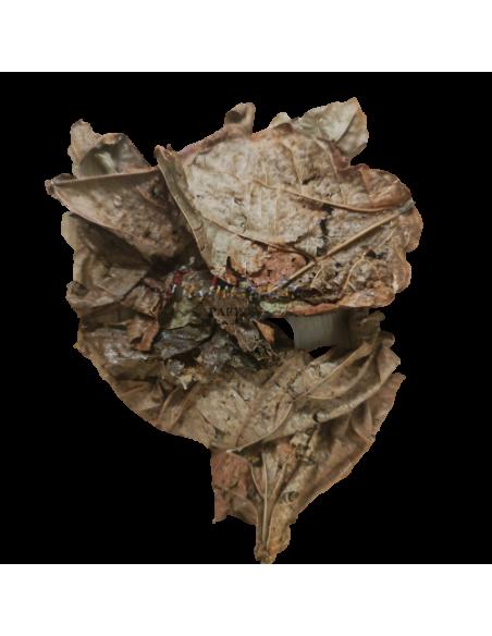 Djeka leaves